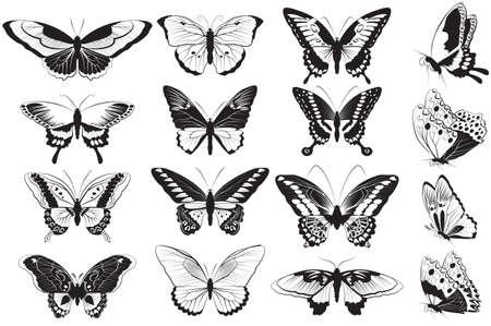 papillon: Vector ensemble de noir et blanc papillons réalistes