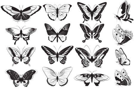 insect: Vector set of Black and white realistic butterflies Illustration