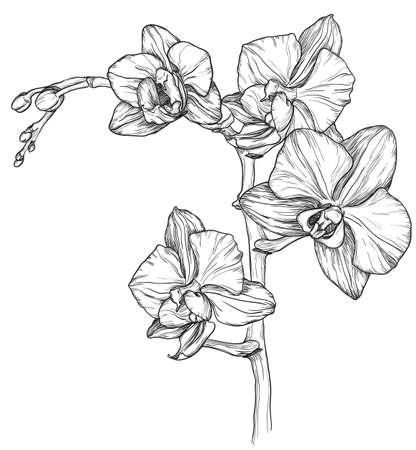 schets van Orchid bloesem
