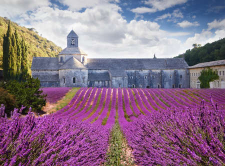 abbaye: Abbey of Senanque with blooming lavander. Provence, France Stock Photo