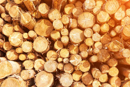Natural Pile of wood logs, wooden background