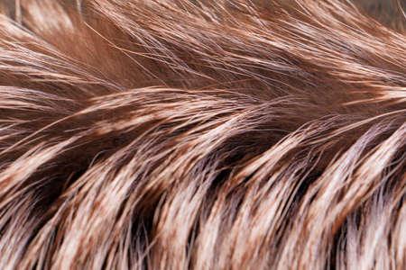 Macro view of brown fur.