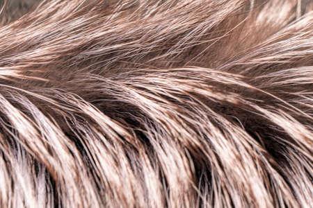 Macro silver fox fur.