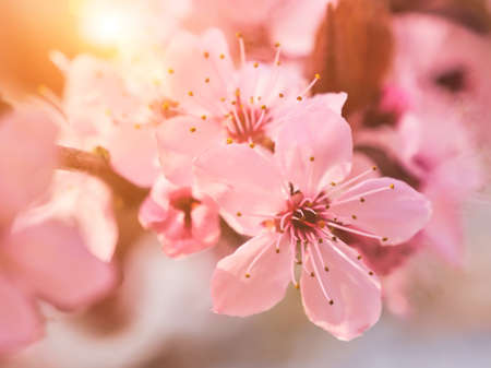 Spring blooming tree and sun flare. Sunny day. Spring flowers. Stockfoto