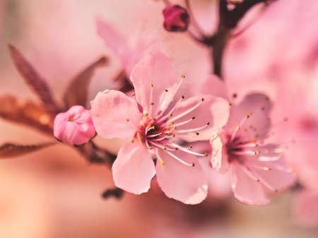 Blooming tree. Spring flowers. Springtime Stockfoto - 128888347