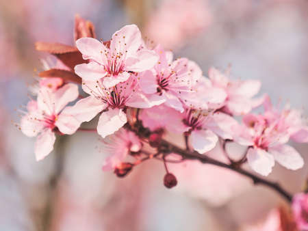 Spring blooming tree. Sunny day. Spring flowers. Stockfoto
