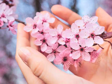 Spring blooming flowers in female hands Spring flowers.