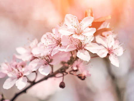 Spring blooming tree and sun flare. Stockfoto - 128888348