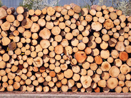 Firewood stacked prepared for winter Stockfoto - 128888355