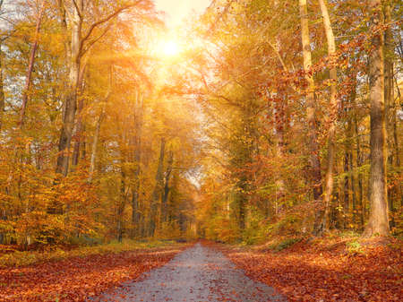 Beautiful alley in a park, autumn background Stockfoto