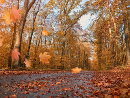 Leaf fall in Beautiful alley, park with colorful trees