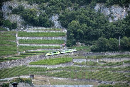 Local train and grapes-Aigle, Switzerland 写真素材