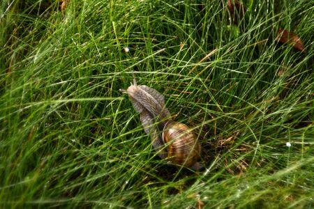 Escargot on the grass
