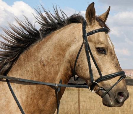 Riding horse Stock Photo