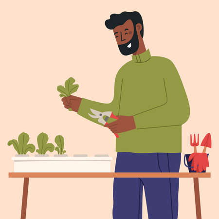 Easy hydroponic garden at home. Man living in city cultivating plants, growing crops or vegetables in pots. Vector illustration