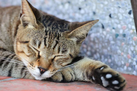 cat sleeping: Cut cat sleeping on the ground Stock Photo