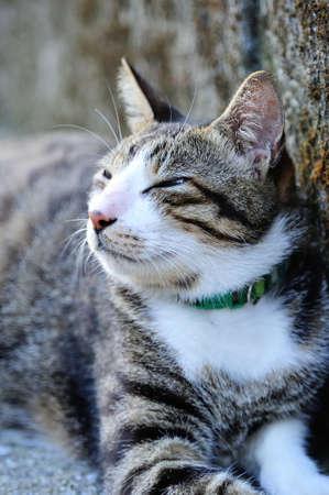 head collar: Cute cat resting
