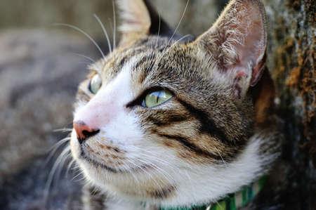head collar: Cute cats face
