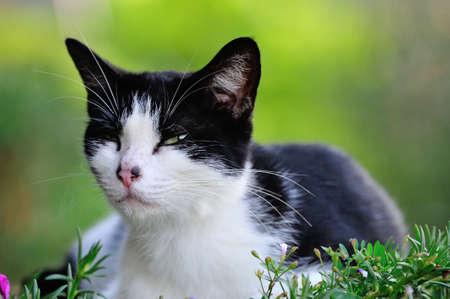 clump: Cute cat in a clump