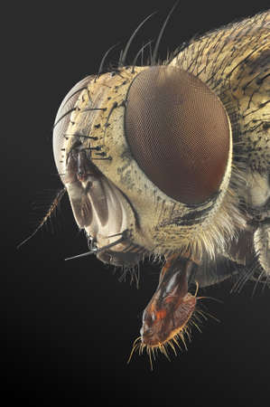 extreme macro: Fly portrait with 7X magnification and full depth of view.
