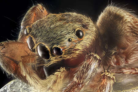 arachnoid: Spider portrait with 7X magnification and full depth of view.