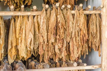 tabaco: tabaco secado deja para los cigarros