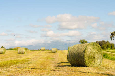 unwrapped: Landscape of hay bales unwrapped.