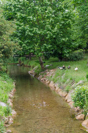 rill: Natural setting where a family of ducks is observed at the edge of a stream.