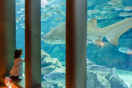 A CORUNA, GALICIA, SPAIN - SEPTEMBER 13 TH, 2016: little girl looking a tiger shark in Finisterrae Aquarium