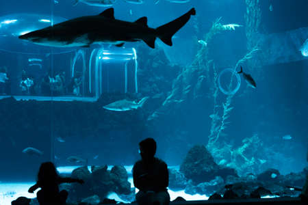 Las Palmas de Gran Canaria, Canary Islands, Spain - July 1st 2018: Visitors enjoy beautiful view of marine life in the biggest tank of new Aquarium Poema del Mar, with the largest curved window of methacrylate for exhibition, which exists in the world. Editöryel