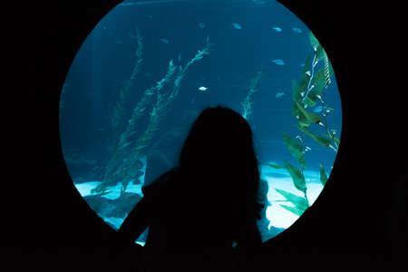 Silhouette of a small child looking through the glass at the various species of fish in the aquarium.