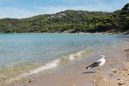 Paradisiacal beach of Notre Dame, island of Porquerolles, archipelago of the Îles dHyères, in the south of France.