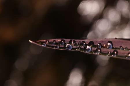 drops of water on leaf Stock fotó