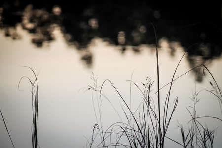 beside: Grass beside the lake reflecting sky and trees.