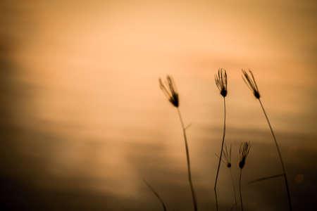 Swollen: Swollen finger grass in front of water reflecting sky