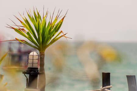 spiky hair: Spiky hair plant