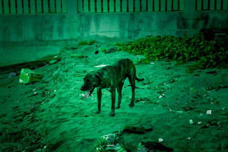k9: Dog and dirty environment