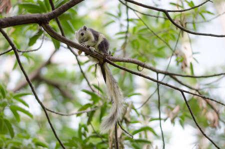 uitpakken: Eekhoorn uitpakken een moer op boom