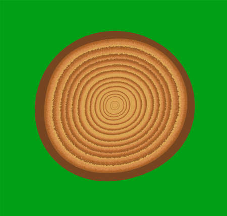 Wooden stump isolated on a green background. Round log part of the tree with annual rings.