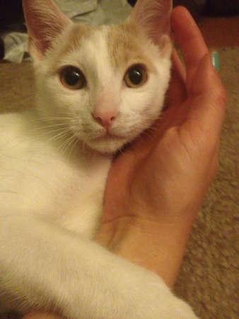 otganimalpets01: kitty