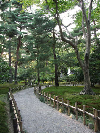 Footpath in Japanese garden with bamboo fench and giant tree