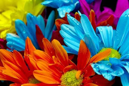 petites fleurs: Fleurs color�es sur un fond noir dans un environnement de studio