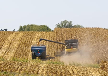 A combine and a tractor work to harvest a Midwest corn crop in Northeast Iowa