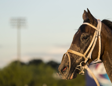 futurity: Images of horses and their riders at a horse race