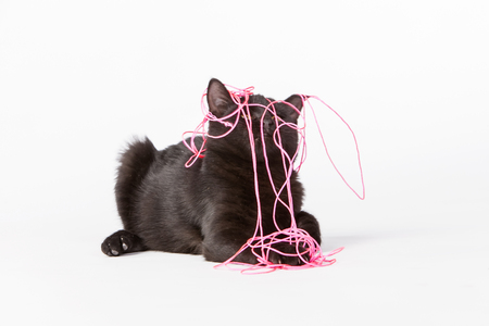 A black kitten plays in a studio environment Stock Photo