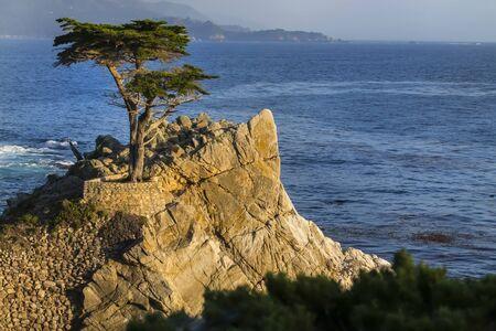 Lone cypress tree on the California coastline