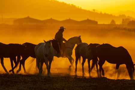 A Mexican Charro rounds up a herd of horses running through a field on a Mexican Ranch at sunrise Reklamní fotografie