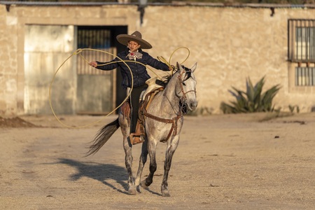 A young Mexican Charro rounds up a herd of horses running through a field on a Mexican Ranch at sunrise Stok Fotoğraf