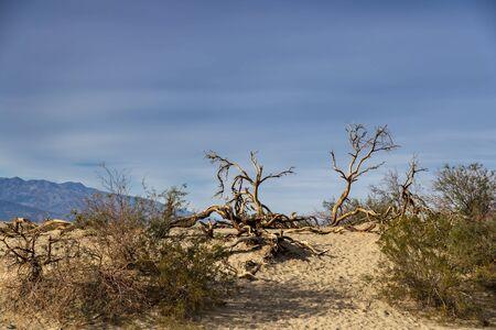 Scenic views of an American Desert