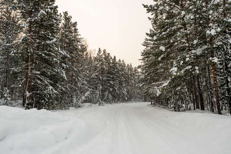 Winter landscape. Snowy road in the forest covered with snow. Standard-Bild